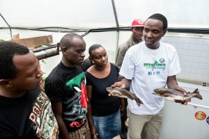 Daniel Kimani demonstrating his aquaponics to Mkulima Young champions
