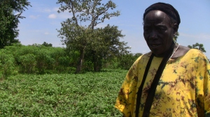Perpetua Okao is an OFSP farmer and vine multiplier in Atego village, near Lira, Uganda.