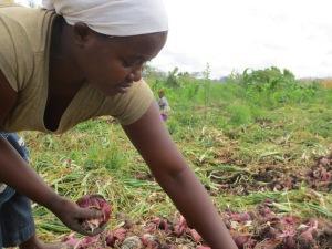 Juliana Amadeus sorts onions